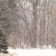 Heavy Snowfall with Large Snowflakes. — Stock Video