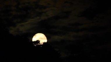 Full Moon Rising Timelapse. — Stock Video