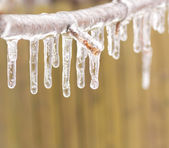Ice coated tree branch after an ice storm. — Stock Photo