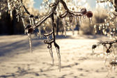 Beautiful ice coated trees after an extreme ice storm. — Stock Photo