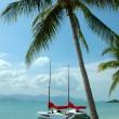 Stock Photo: Catamarnear beach