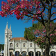 Lisbon, Portugal: Bloomig tree near Monastery of Hieronymites - Stock Photo