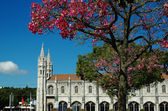 Lisbon, Portugal: Bloomig tree near Monastery of Hieronymites — Zdjęcie stockowe