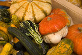 Pumpkins at the market — Stock Photo