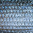 Background of fish scales - Stock Photo