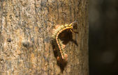 Furry caterpillar on the tree — Stock Photo
