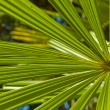 Stock Photo: Background of tropical leaves
