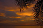 Amazing sea sunset with a palm leaf at the foreground — Stock Photo