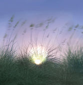 Sunset in the grass on the beach — Stock Photo