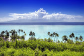 Palm trees on tropical beach in Moorea — Stock Photo