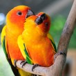 Couple parrot — Stock Photo #19453495