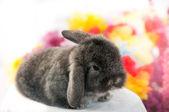 Young bunny — Stock Photo