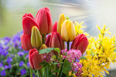 Fresh Beautiful spring flowers background — Stock Photo