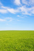 Swiss agriculture - Field of green grass with beautiful cloud - — Stockfoto