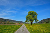 Country road through the agricultural land in summer — Stock Photo