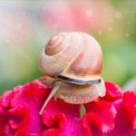 Snail on flower in  garden — Stock Photo #50249099