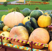 Pumpkin carriage — Stock Photo
