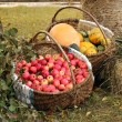 Autumn garden goodies — Stock Photo