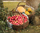 Autumn garden goodies — Foto de Stock