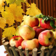Apple basket — Stock Photo