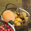 Pumpkin basket — Stock Photo