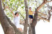 Children on the tree — Stock Photo
