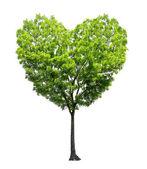 Drzewo kształt serca — Zdjęcie stockowe