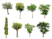 Collection of tree on white background — Stock Photo