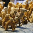 Tunisian camels of plush — Stock Photo