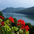 Red geranium at the Vidraru lake in Romania — Стоковая фотография