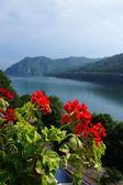 Red geranium at the Vidraru lake in Romania — Stock Photo