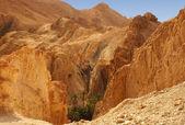 Golden mountains of the Chebika oasis in Tunisia — Stock Photo