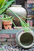 分开的花园装饰着瓦罐 — 图库照片