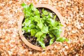 Beautiful leaves of green plant in zen garden — Stock Photo