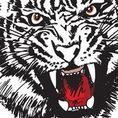 Sketch of white tiger. Vector illustration — Stockvektor
