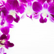 Orchid — Stock Photo #33601031