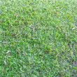 Green grass surface — Foto Stock