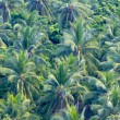 Close up of green coconut tree leaves — 图库照片