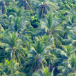 Close up of green coconut tree leaves — Foto de Stock