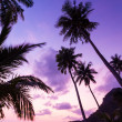 Silhouetted of coconut tree — Foto de Stock