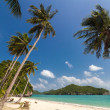 Coconut Trees on a beach — Stock Photo