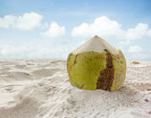 Coconut fruit on the sand beach — Stock Photo