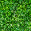 Plastic green grass — Stock Photo #33635725