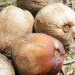 Mature coconuts — Stock Photo