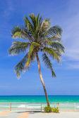 Coconut trees — Stock Photo