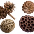 Pine cones — Stock Photo #33684861