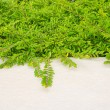 Stock Photo: Green leaves with Concrete floor