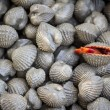 Shellfish — Stock Photo