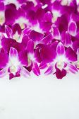 Орхидею — Стоковое фото
