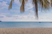 Sand Beach with Coconut tree — Stock Photo